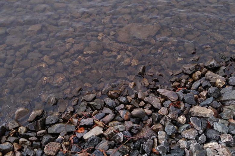 飯浦の湖岸は石が多い