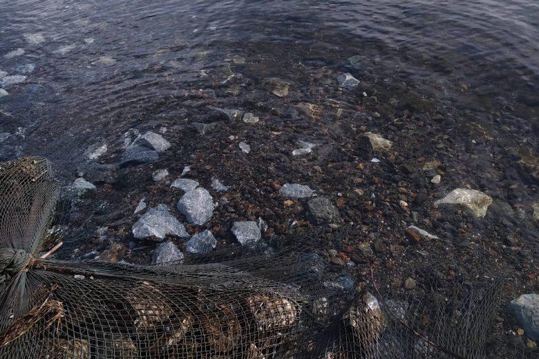 姉川人工河川のボトムと石