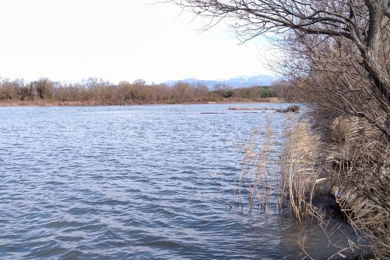 姉川の本流と岸にある木