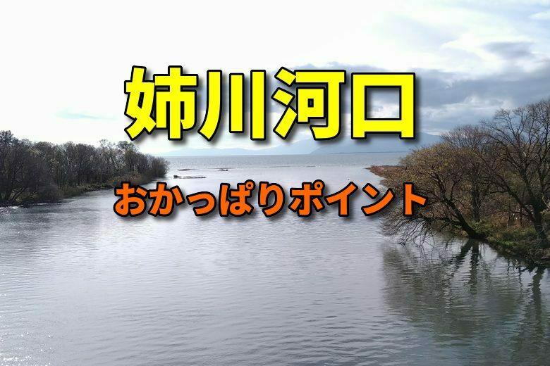 姉川河口のバス釣りおかっぱりポイント