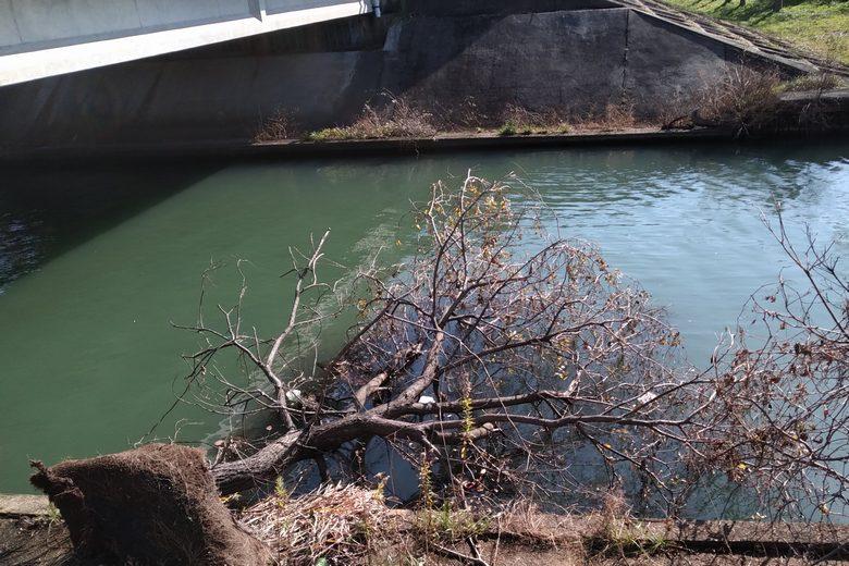 丁野木川に倒れている木