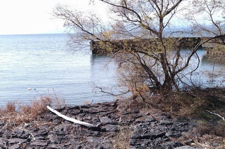早崎漁港のミオ筋を狙える岸