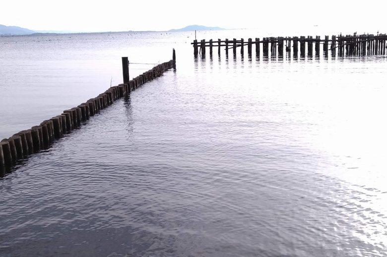 湖岸緑地長浜南浜のシャローフラットエリアの杭