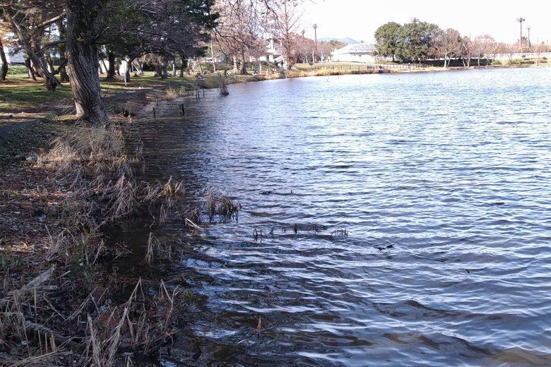 南浦内湖の南側の岸
