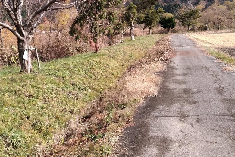 野田沼の南側の通路