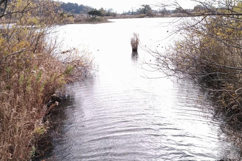 野田沼から琵琶湖に通じる水路