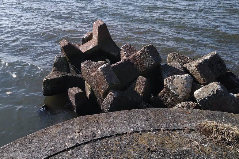 田川の河口の先端とテトラブロック