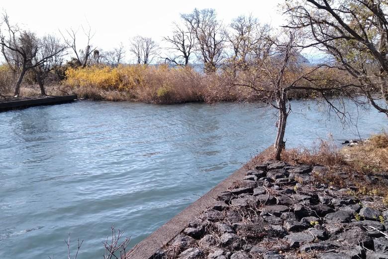直角に曲がる余呉川の河口