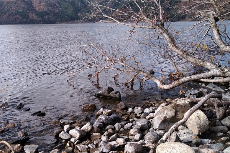 藤ヶ崎のの岸にある木と岩