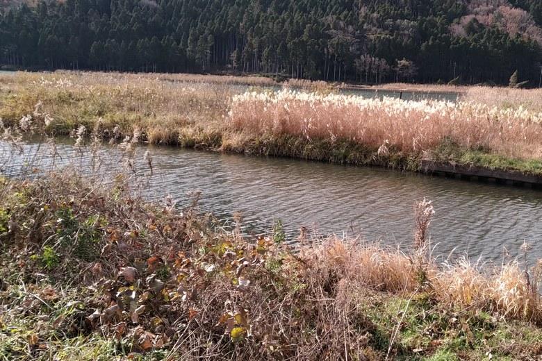 琵琶湖の塩津ワンドに流れる大川