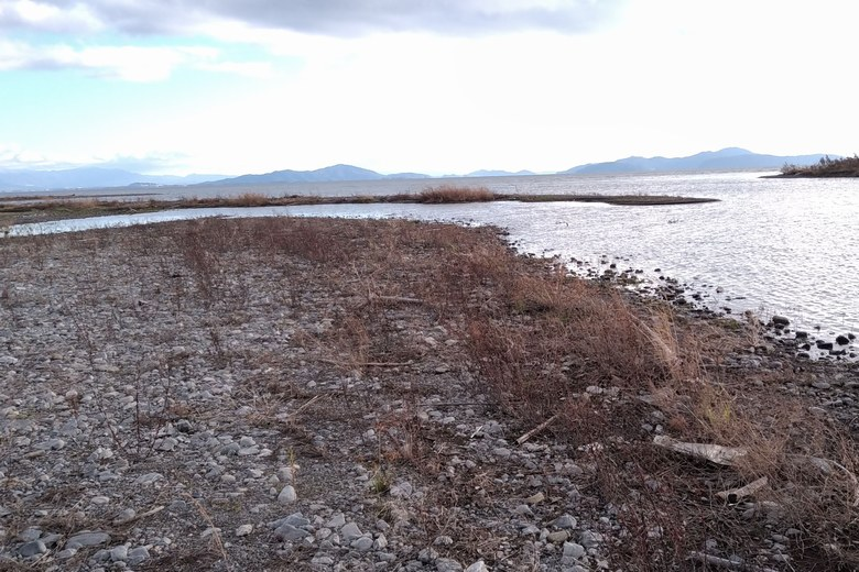 安曇川南流の河口の砂利や石