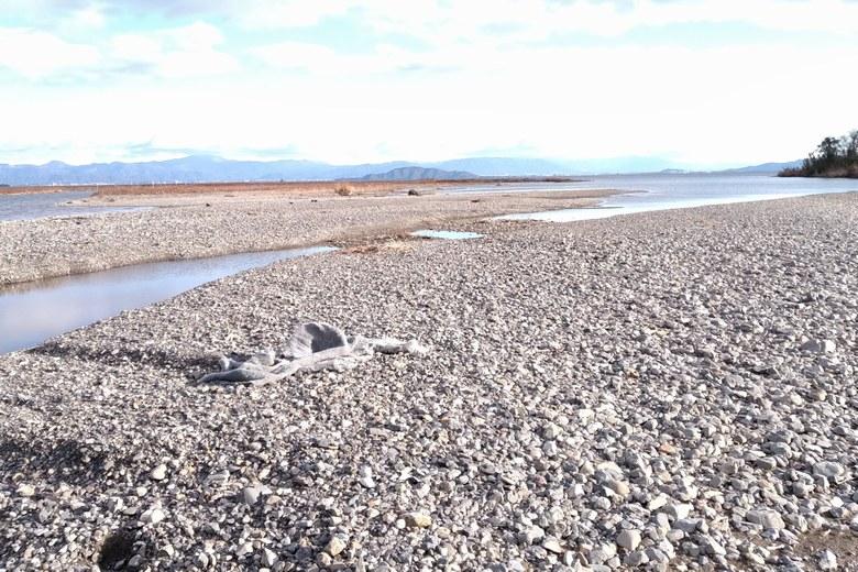 安曇川南流の広い砂利浜