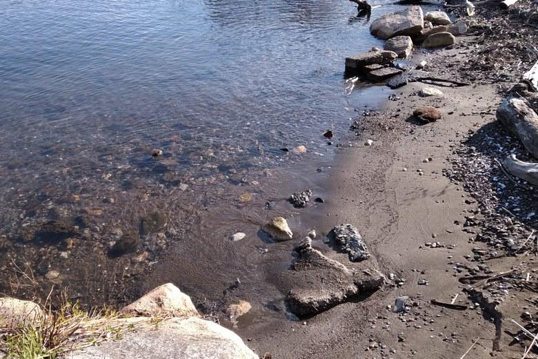 安曇川浜園地の砂利浜のボトム