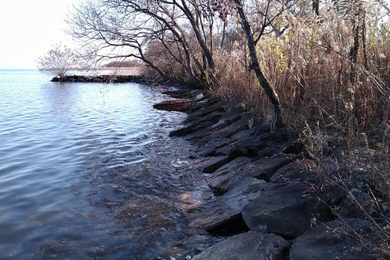針江浜の、岩の護岸