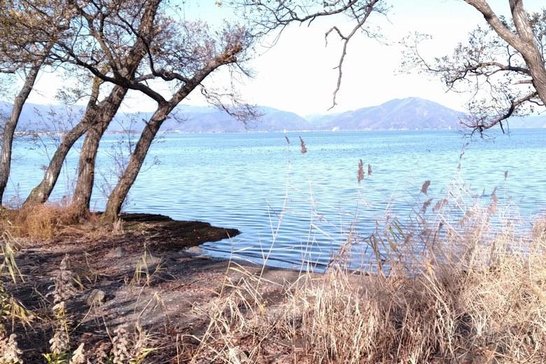 針江浜の岸辺と琵琶湖