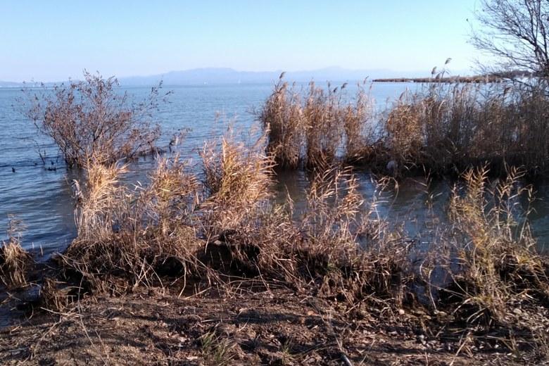 琵琶湖に流れ込む今川河口