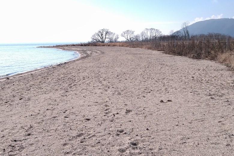 鴨川川の東岸の砂浜