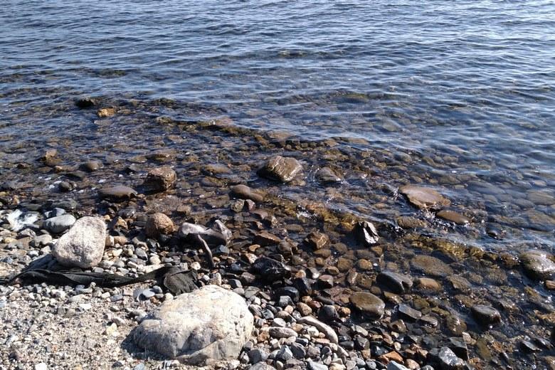 鴨川河口にある点在する石
