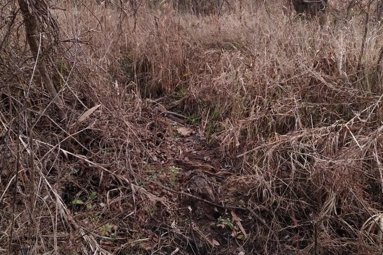 金丸川河口のアシや植物が多いワンド