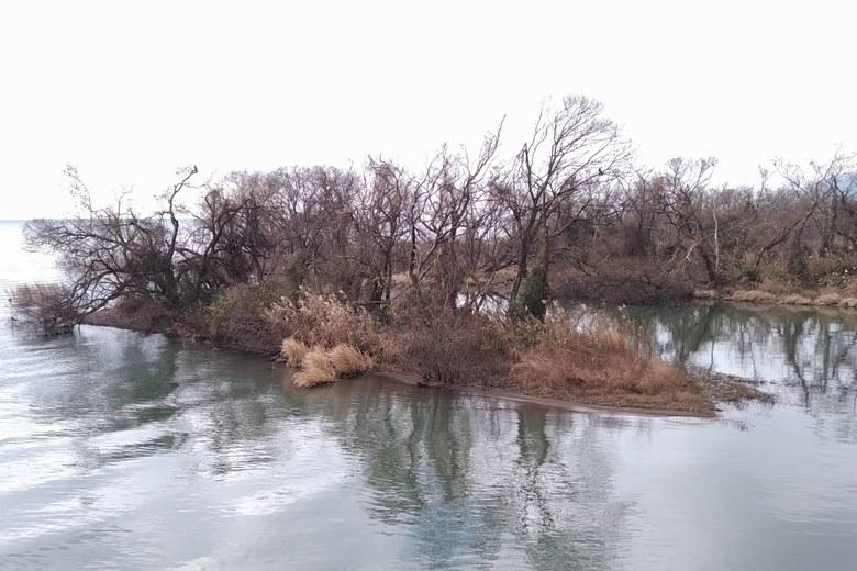 金丸川のワンドエリア