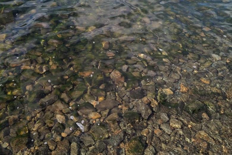 黒土崎の北側のボトムの石
