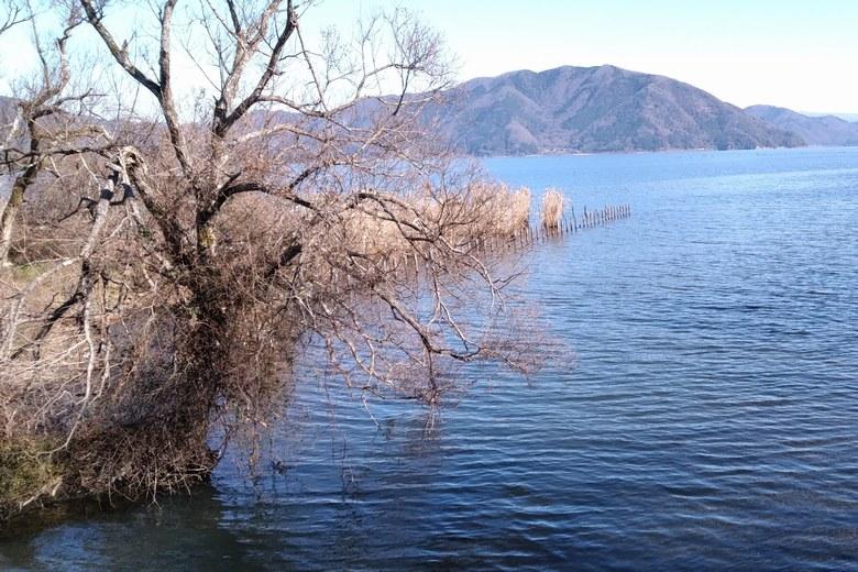 貫川の河口の杭とアシ