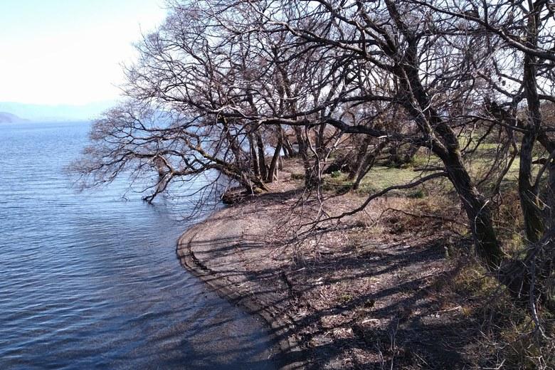 貫川の河口の砂浜と木