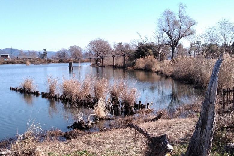 南側の貫川内湖の杭とアシ
