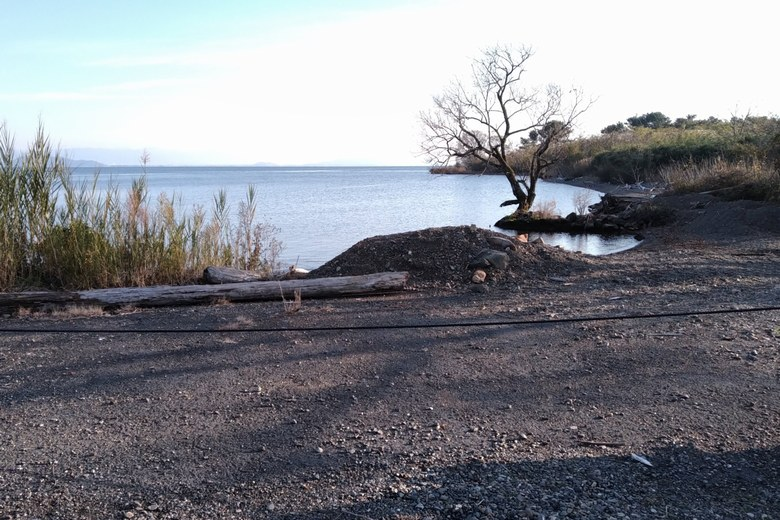 新堀船溜まりの岸辺