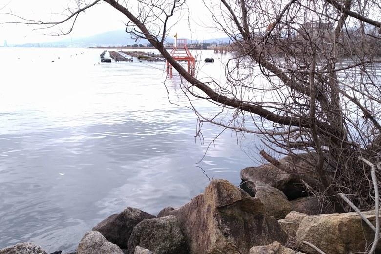 カネカ裏の南岸の取水塔と浮き産卵床