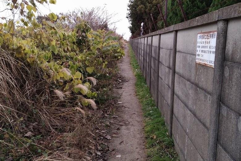 植物が多いカネカ裏の通り道