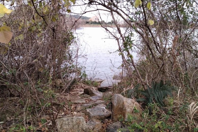 植物のスキマから岸辺に立てるスペース