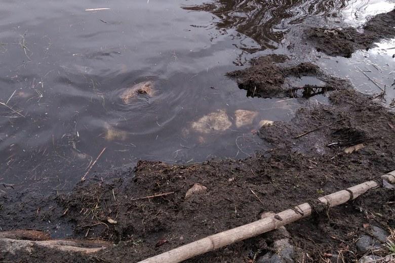 堅田雄琴湖岸公園のボトムの泥