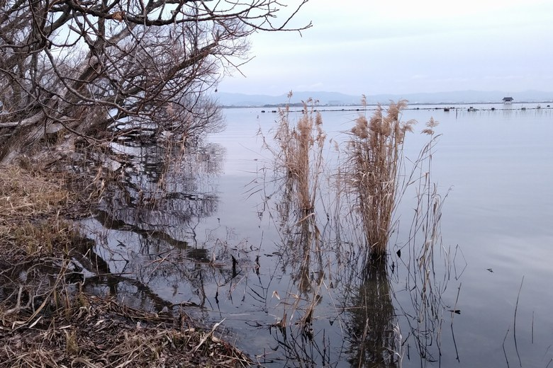 衣川湖岸緑地の南岸の岸辺
