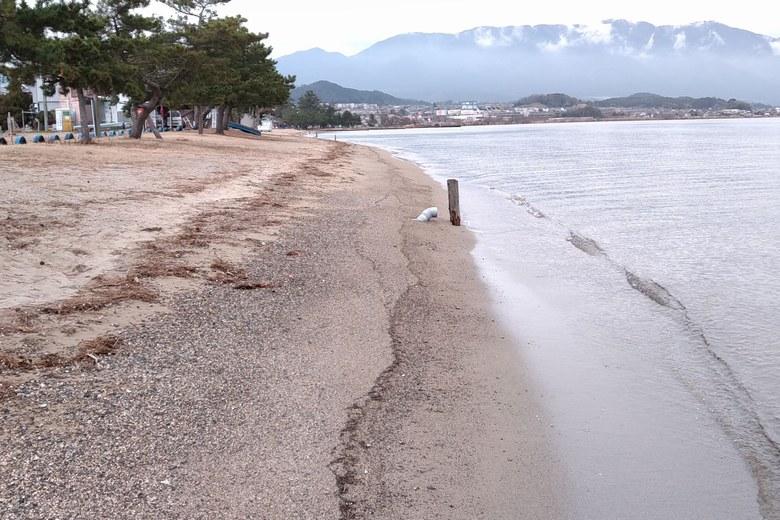 真野浜水泳場の砂浜