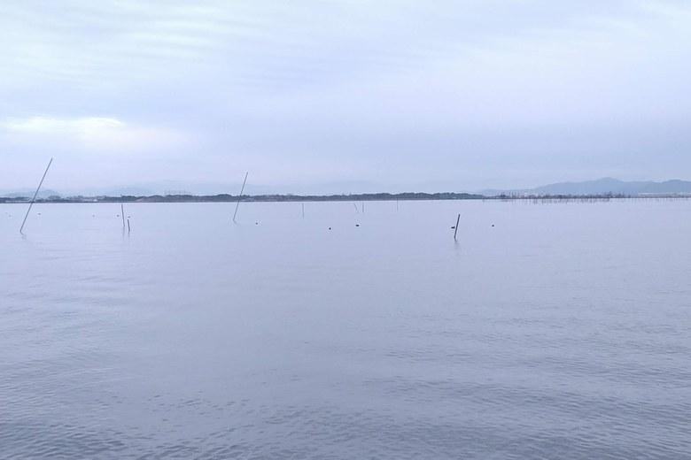 雄琴川河口の沖にあるエリ