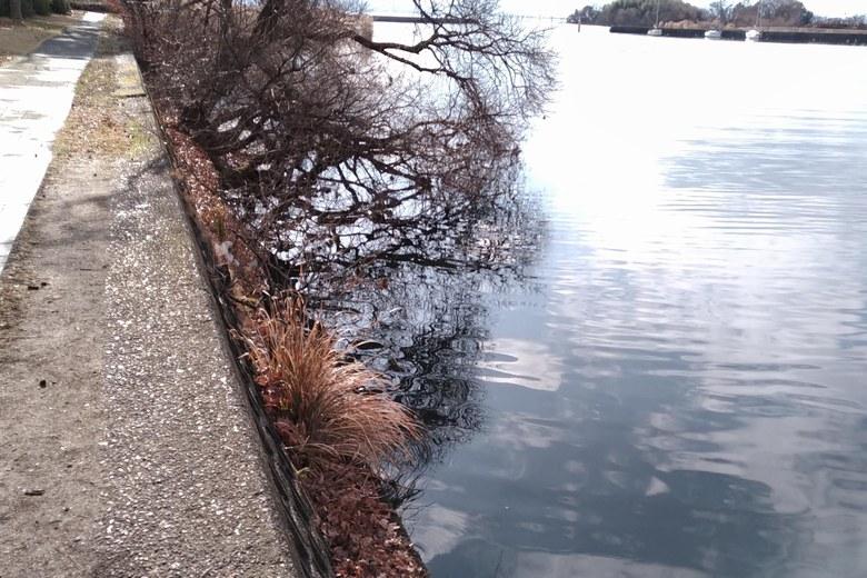 雄琴港の東の護岸と木