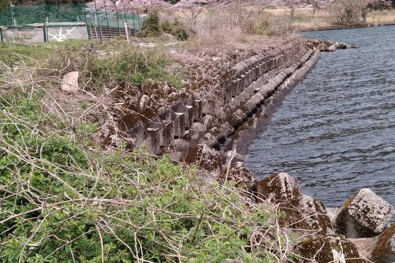 奥出湾のテトラブロック帯の護岸