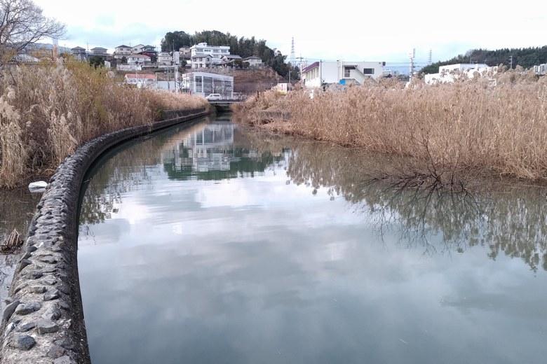 防波堤から見た河口とアシ