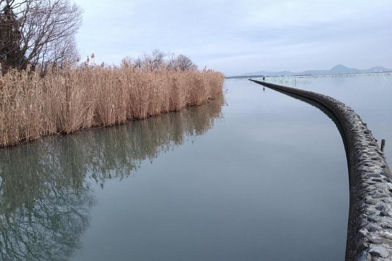 御呂戸川の防波堤と衣川湖岸緑地のアシ
