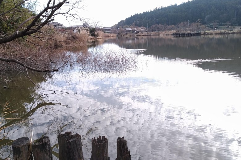 乙女ヶ池の東の岸辺
