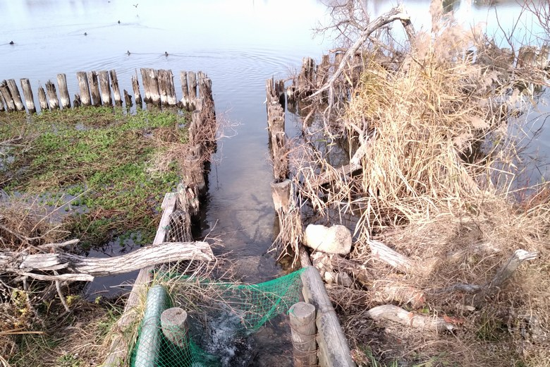 乙女ヶ池の南の流れ込み