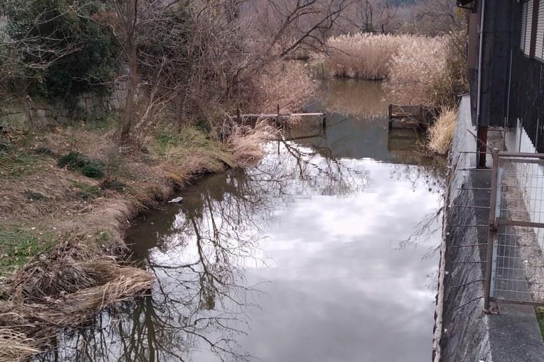 乙女ヶ池へつながる水路