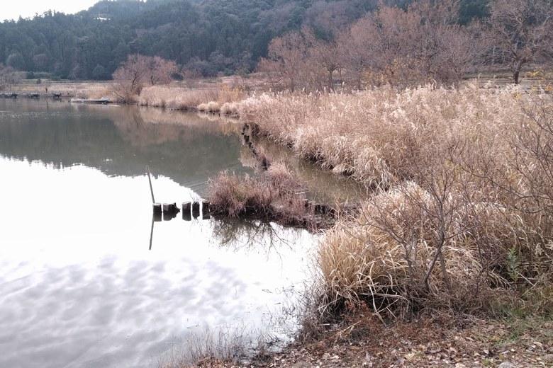 乙女ヶ池の西側の岸辺