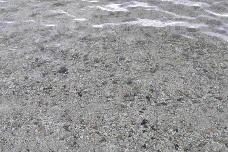 滝川の南側エリアの石が混じったボトム