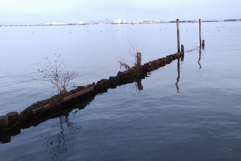 天神川河口の東岸の杭