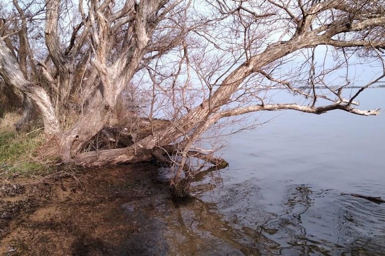 天神川河口の岸辺と木