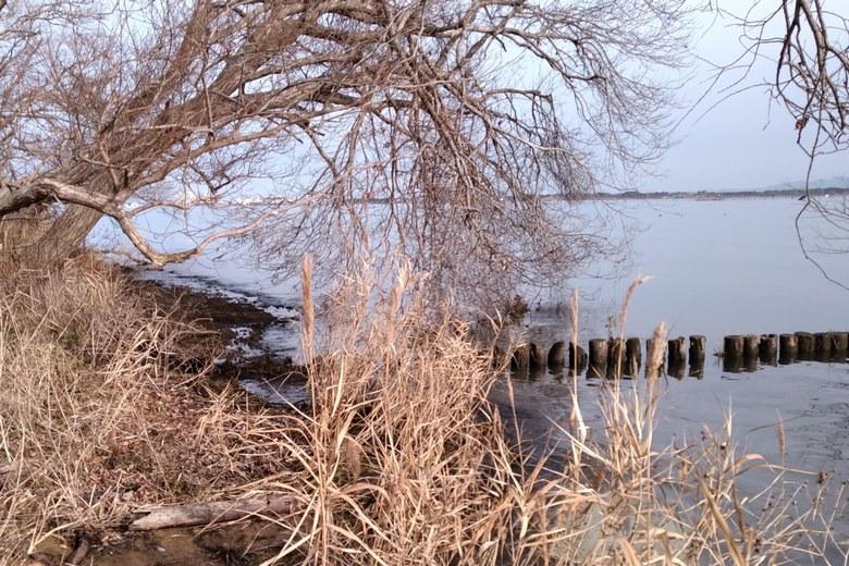 河口の木と杭