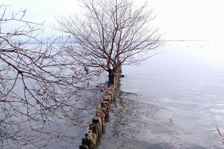 河口の先端付近にある杭