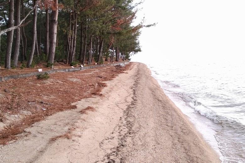 鵜川の南の砂浜と木